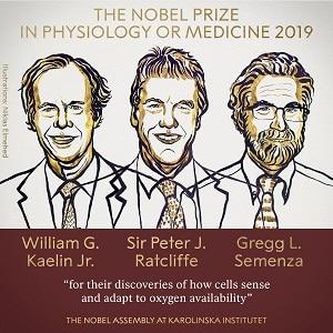 2019 Nobel Prize in Physiology or Medicine