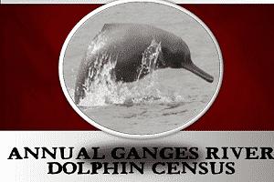 Ganges-River-Dolphine