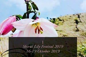 manipur's shirui lily festival 2019