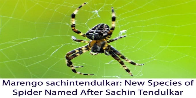 Newly discovered spider species