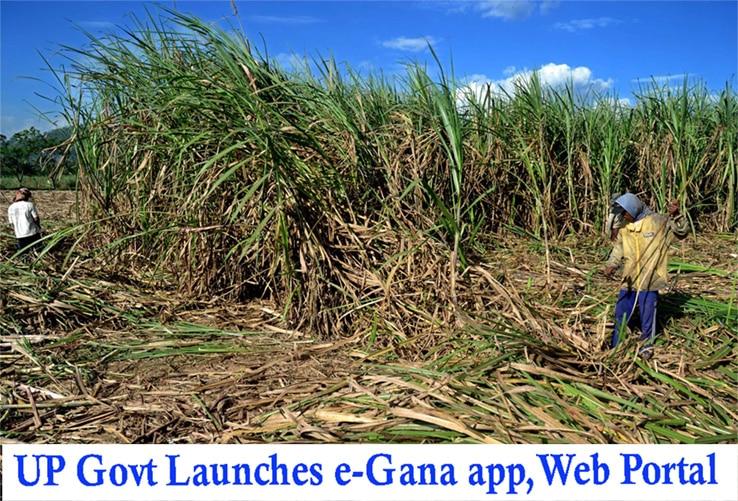 e-Ganna App Web portal