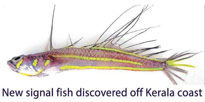 new-signal-fish